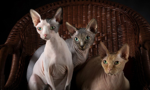 Marie-Jeanne, Maurice & Foubert